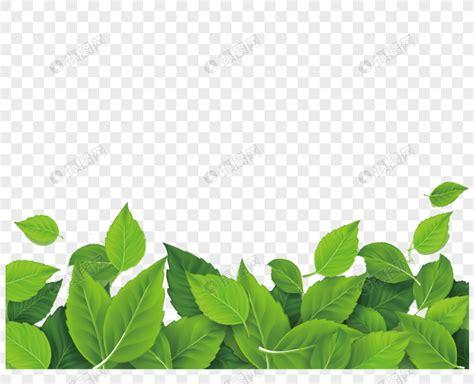 perbatasan pola daun hijau  indah gambar  gratis