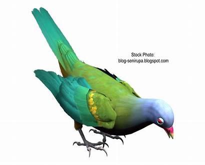 Burung Gambar Merak Resolution Gokil Kartun Related