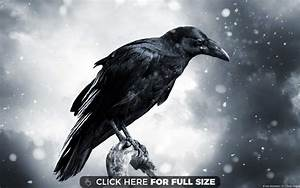 raven wallpapers, photos and desktop backgrounds up to 8K ...