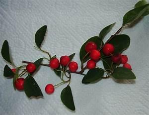 Rote Blätter Baum : unbekannte rote beeren am baum cotoneaster multiflorus ~ Michelbontemps.com Haus und Dekorationen