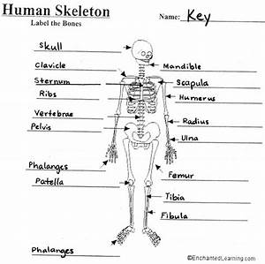 The Skeletal System Anatomy And Physiology Coloring Workbook Answers  U2013 Xyzcoloring