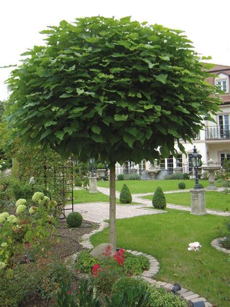 Bäume Vorgarten Nordseite kugelbäume für den vorgarten bild kugel trompetenbaum seite