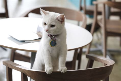 cat cafe permanent cat caf 233 to open in nyc new york post