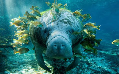 National Geographic Animal Wallpapers - national geographic animal wallpaper album 5 13