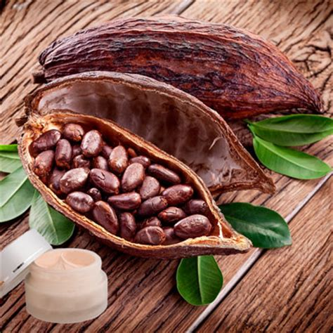 lippenpflege kakaobutter selber machen lippenpflege rezept lippenbalsam mit kakaobutter selber machen