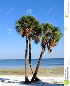 Palm Trees On Florida Beach Royalty Free Stock Images ...