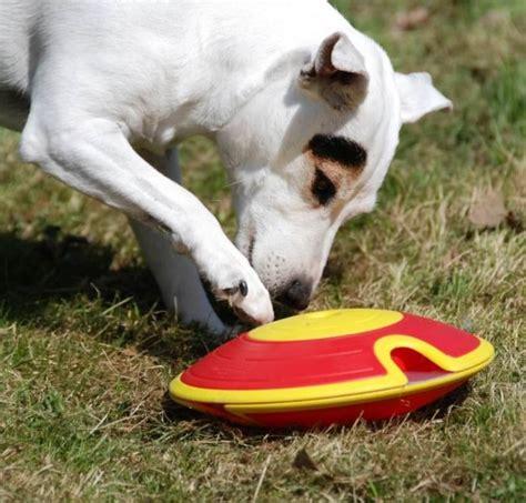 Intelligenzspiel Für Hunde