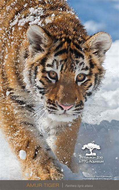 Wallpapers Phone Mobile 720p Screen Animals Resolution