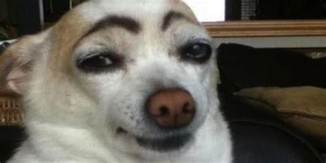 fotos duenos ociosos pintan  sus perros cejas de humano