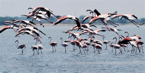 bird spots in southern india bird spots in southern india wandertrails com