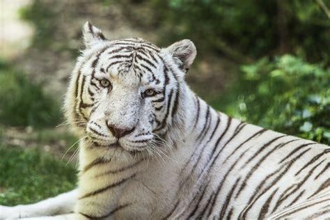 971,469 likes · 41,006 talking about this · 389,611 were here. Un weekend au Zoo de Beauval - Une Belge Un Francais