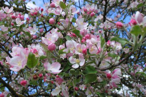 Pavasaris - Lessons - Tes Teach