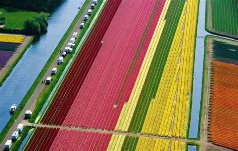 karya hebat pelangi  ladang tulip