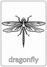 Dragonfly Coloring Animals Tweet Whatsapp sketch template