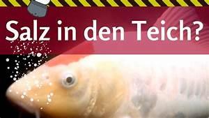 Goldfisch Haltung Im Teich : salz im teich gut oder schlecht f r koi goldfisch und co ~ A.2002-acura-tl-radio.info Haus und Dekorationen