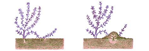 samen pflanzen