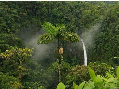 flora  fauna  chhattisgarh images  pinterest flora plants  national parks