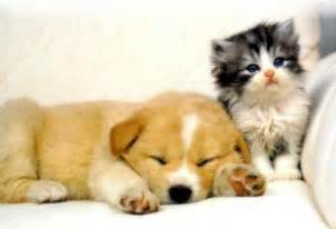 dogs that are with cats happy and animals cats and dogs