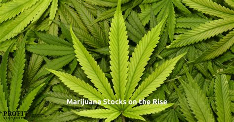 canadian marijuana stocks   canada pot legalization