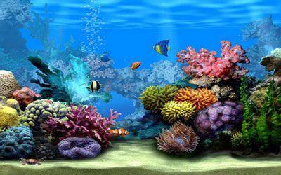 Living Marine Aquarium 2 Animated Wallpaper - free 3d moving screensavers living marine aquarium 2