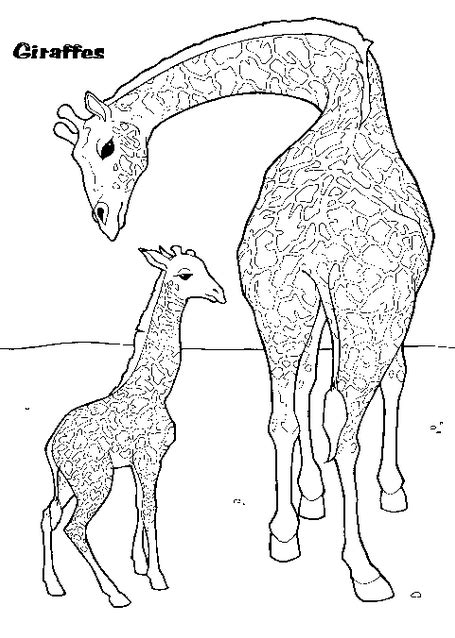 giraffe coloring page coloring page book  kids