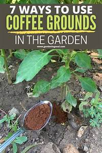 7 ways to use coffee grounds in the garden organic