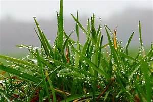 Wann Wächst Rasen : rasen w chst bis bodentemperaturen um 8 grad c unkr uter und gr ser sogar noch bis 4 grad c ~ Markanthonyermac.com Haus und Dekorationen