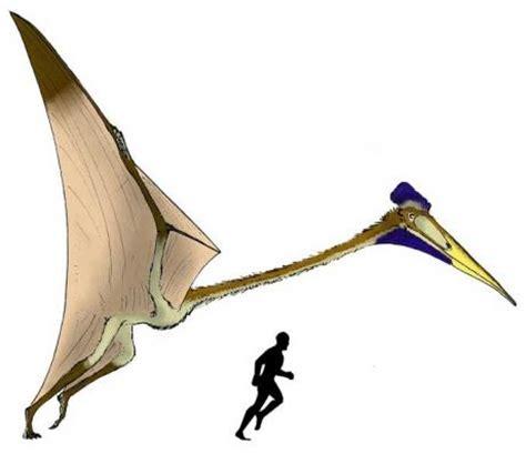 Dinosauro Volante Voil 224 224 Quoi Ressemblaient Vraiment Les Dinosaures Volants