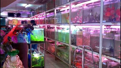 how to store fish fish store in asia aquarium street in saigon nguyen thong st youtube