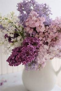 Flieder Schneiden Video : flieder schneiden f r reiche und aromatische bl ten garten duftender flieder pinterest ~ Orissabook.com Haus und Dekorationen