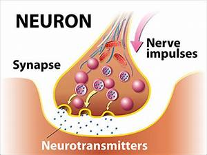 Neurotransmission and Psychiatric Drugs | Drug Withdrawal ...