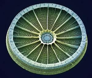 Gemologyonline Com  U2022 View Topic - Jewellery That Looks Like Diatoms