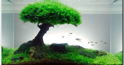 Simple Aquascaping Ideas by House Design And Interior Decoration How To Make