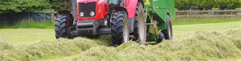 hay horse seed quality grass seeds mixture mix