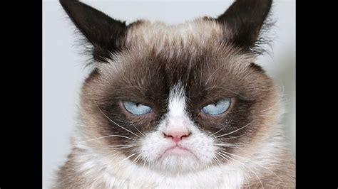 Super Funny Cats Fails Compilation