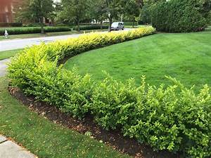 Caring For Hedges Bobbie39s Green Thumb
