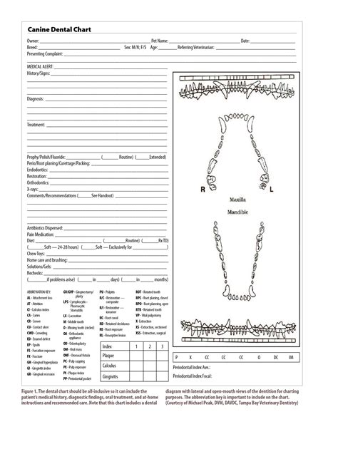 dental charting template 10 best images of dental charting template dental treatment plan chart dental charting