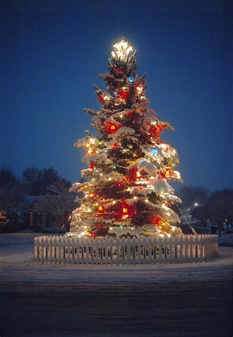 light up outdoor trees christmas 28 best large outdoor christmas tree 2015 new design