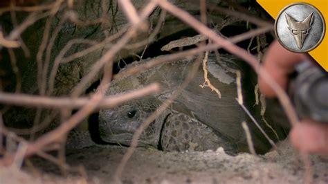 Going Gopher for Tortoises! - YouTube