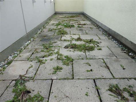 Unkraut In Fugen Vernichten unkraut entfernen unkrautentfernung steinrein