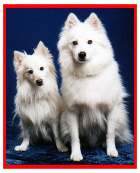 bandits the american eskimo