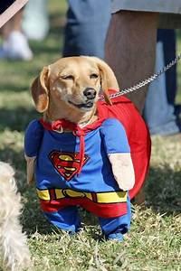 Funny Pet Costumes   Amazing Creatures