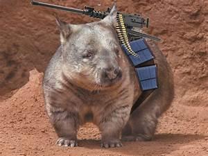 Solar Powered Wombat Assassins