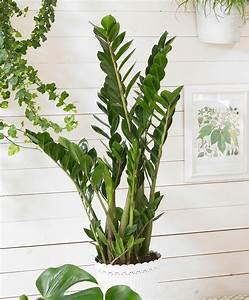 Grande Plante D Intérieur Facile D Entretien : 10 plantes d int rieur faciles d 39 entretien et quasi ~ Premium-room.com Idées de Décoration