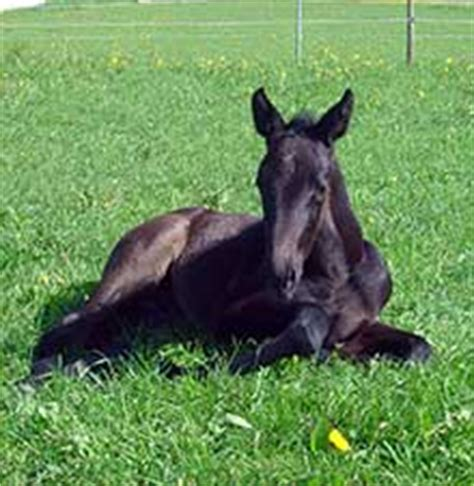 tieraerztliche praxis fuer pferde kolik beim pferd