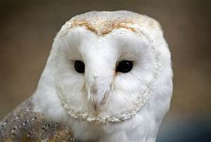 owl matchmaker realty