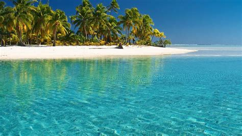 water ocean landscapes cook islands palms sea beach