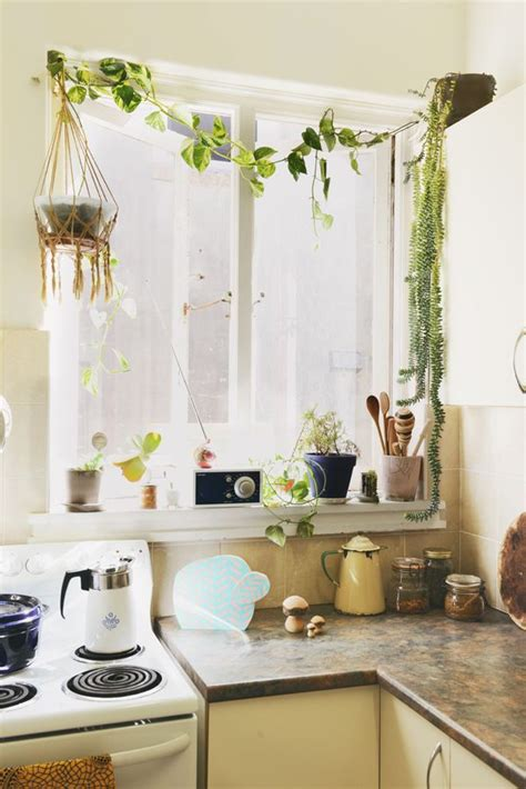 House Plants For Kitchen Window by Home Home Live Home Decor Home Bohemian Living