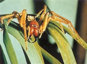 Weiße Spinne Deutschland : natur umwelt tiere ratgeber ~ Orissabook.com Haus und Dekorationen