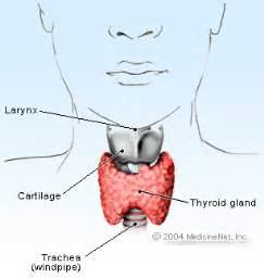 Hyperthyroidism & Hypothyroidism Symptoms, Treatment & Diet  Larynx Throat Disorders
